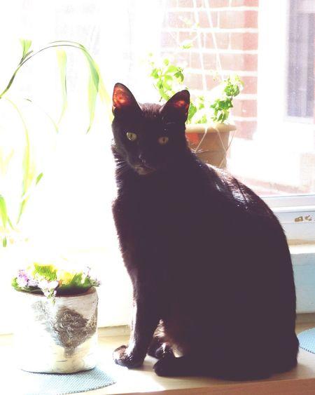 Kitty Cat Black Cats BLackCat Cats Meow Window Home Life Home Life
