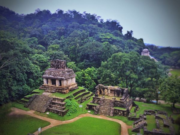 Palenque. Travel Destinations Architecture History Old Ruin Tree Ancient Built Structure Ancient Civilization Tourism Outdoors Travel Beauty In Nature No People Nature Day Scenics Growth Building Exterior Tranquility Green Color Maya Mayan Ruins Mayan Wonders