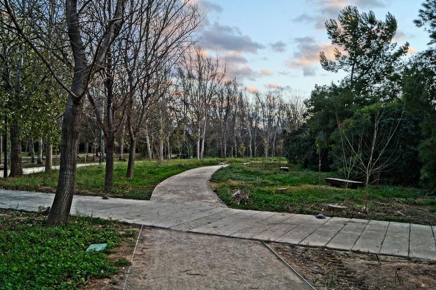 Comunidad Valenciana Comunitat Valenciana Espana-Spain España🇪🇸 Filter Filtro Landscape Painting Style Park Park - Man Made Space Parque  Parque De La Rambleta Perspective Tree Valencia, Spain Landscapes With WhiteWall Reino De Valencia Regne De Valencia