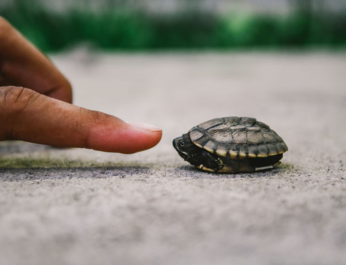 Cropped hand touching turtle on footpath