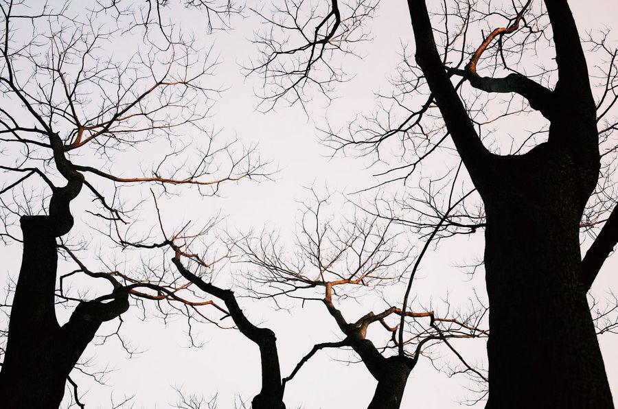 Deadtree Trees Tree Branches Twigs Bough Nature Sky Morning Japan