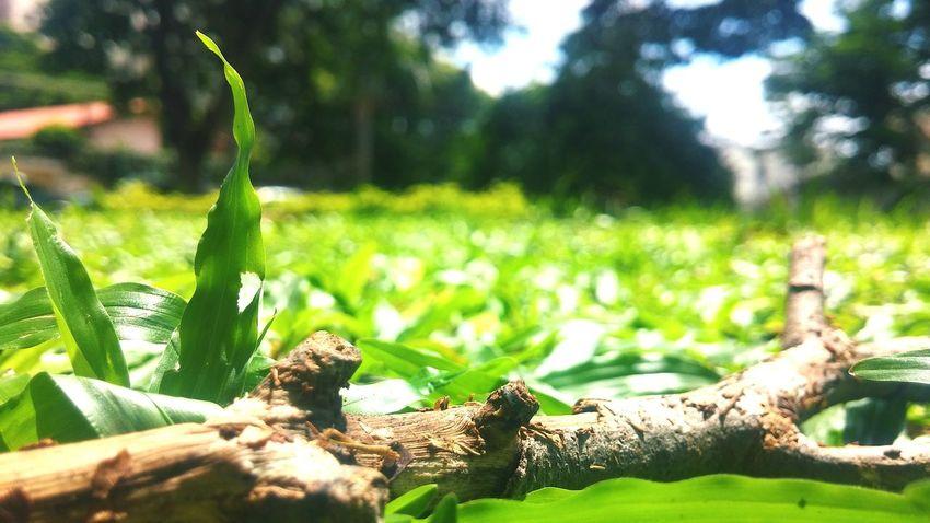 Branch Grass Green Depth Of Field Galho Grama Verde
