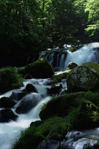 Waterfall Scenics Environment Nature Idyllic Beauty Forest Water Landscape Tree Tranquility Social Issues Vacations Environmental Conservation Beauty In Nature Travel Destinations Lush Foliage Motion Tranquil Scene Green Color 蓼科大滝 in Chino, Nagano , Japan Tropical Rainforest Flowing Water Rock - Object