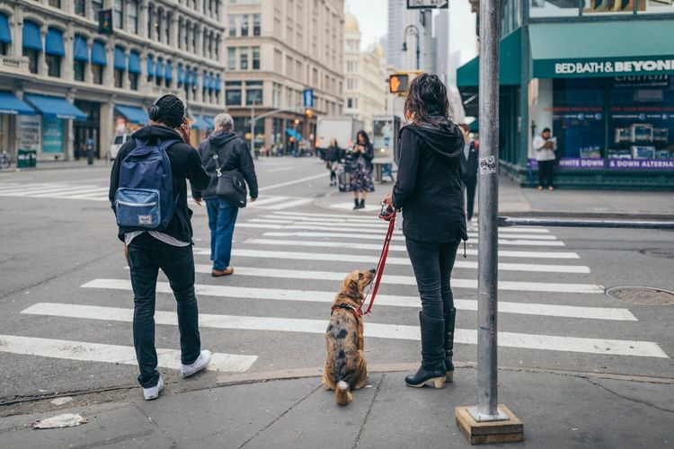 The Street Photographer - 2017 EyeEm Awards Dog Pets Walking Street One Animal City Street Full Length City Outdoors Day Adult Men Women People Domestic Animals Friendship Building Exterior Young Women Young Adult Only Women