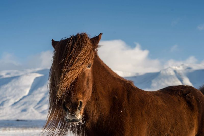 Horse standing against sky during winter
