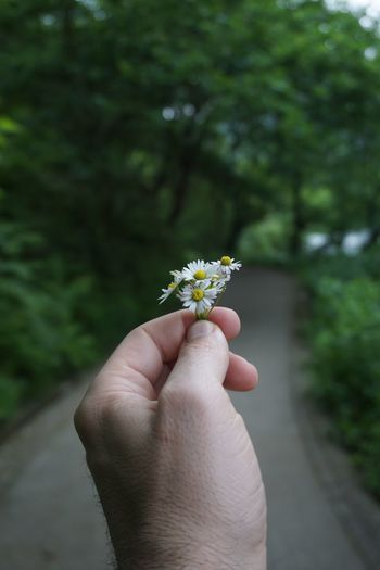 EyeEm Selects Human Hand Hand Human Body Part Flower Plant Flowering Plant Human Finger Holding One Person Focus On Foreground Fragility Personal Perspective Finger Vulnerability  Real People Freshness Lifestyles Nature Body Part Outdoors