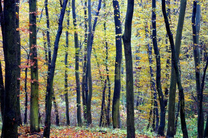 Las Dębinka. Autumn Polska Forest Las Jesiennie Jesień Naturelovers Eyeemphotography Eyem Nature Lovers  Landscape_obsessions Poland Nature EyeEm Best Shots Autumn Collection Hrubieszow
