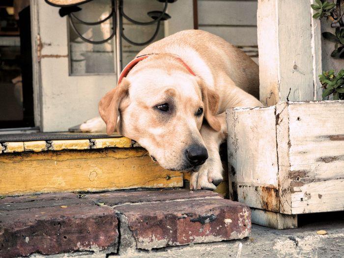 Dog Pets One Animal Mammal Animal Themes Outdoors Domestic Animals Portrait