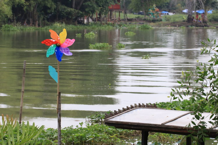 Close up the small colorful wind turbine beside the pond Beside The Pond Wind Turbine Beauty In Nature Colorful Wind Turbine Day Floating On Water Flower Flower Head Flowering Plant Focus On Foreground Fragility Freshness Growth Lake Leaf Lotus Water Lily Nature No People Outdoors Petal Plant Plant Part Reflection Vulnerability  Water