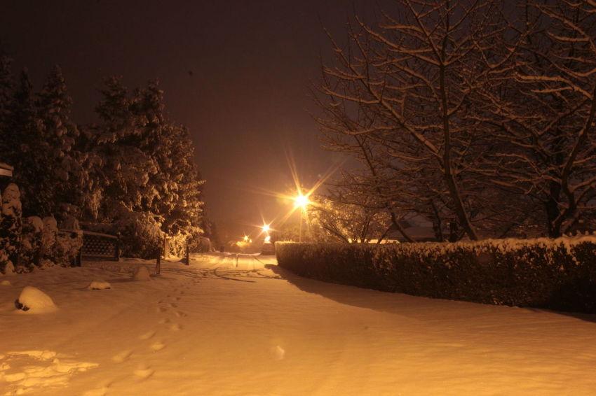 Bare Tree Beauty In Nature Cold Temperature Illuminated Nature Night No People Outdoors Scenics Sky Snow Tree Winter
