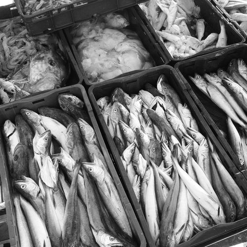 High angle view of seafood on display at fish market