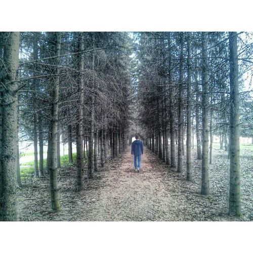 🚶 Instasize Лес деревья дерево Тропинка уходящийвдаль маршбросок прогулка ель ёлки ШИШКИ Forest Trees Tree Path Throwmarch Walk Spruce Trees Bumps Found Cool Filter Picsart Recedingintothedistance kursk_insta nexus4photography nexus4 fv5 fv5camera Курскfoto