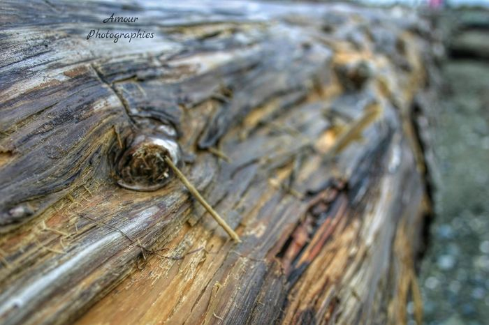 Beach Break Collection pt.2 . Amour Photographies Drift Wood  Beach Wood Enjoying Life Outdoor Life Explore Nature Log Weathered Beach Explore More Beach Photography Macro Upclose And Personal Macro Shot Macro Photography Beautiful Vancouver Island British Columbia Canada Exploring Nature Nature Simple Photography