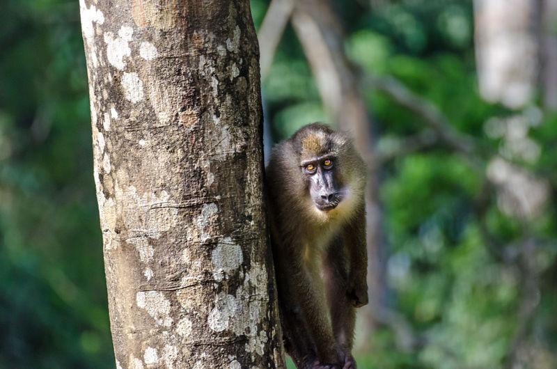 Close-up of monkey on tree trunk