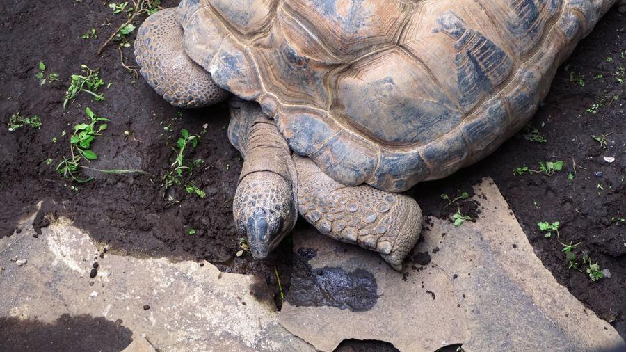 old turtles eat