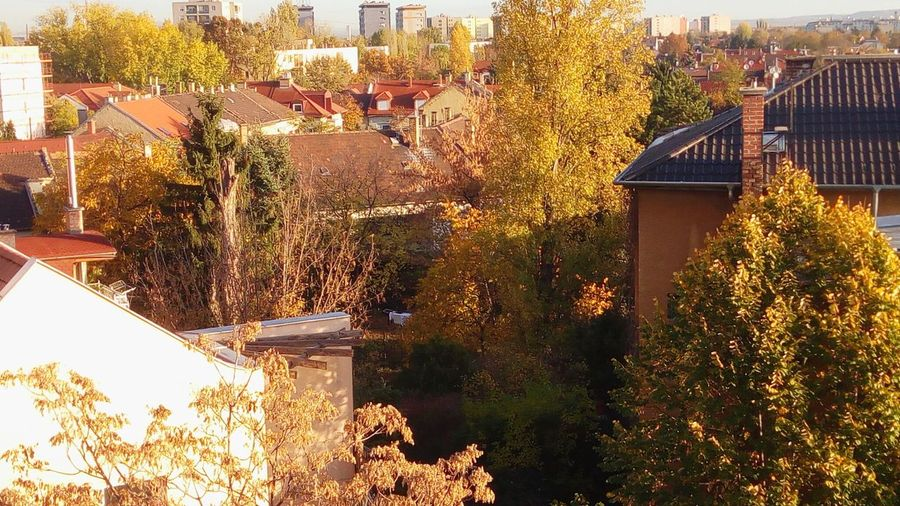 Green Belt Budapest Zugló Autumn colors Autumn Autumn🍁🍁🍁 Tree Front Or Back Yard Architecture Building Exterior Built Structure Plant Residential Structure Roof TOWNSCAPE Rooftop Town