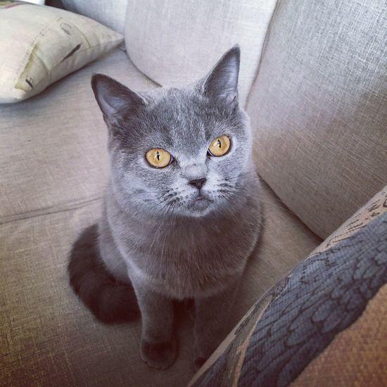 meow meow!妹妹
