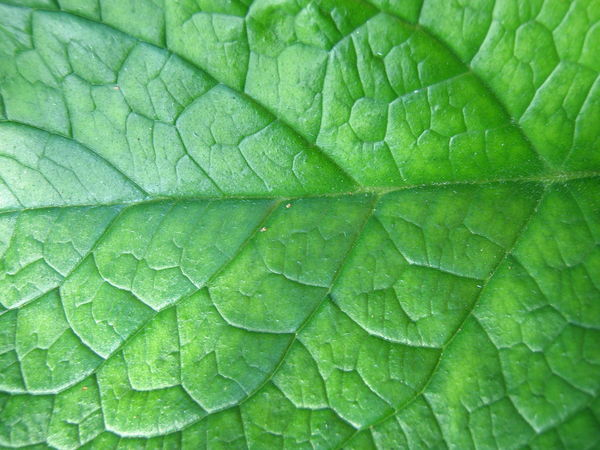 Leaf Close Up Bright Gardening Close-up Green Vein Veins In Leaves Background Backgrounds Close-up Colour Day Drop Freshness Full Frame Garden Green Color Greenery Leaf Nature No People Outdoors Plant Texture Wild Flora