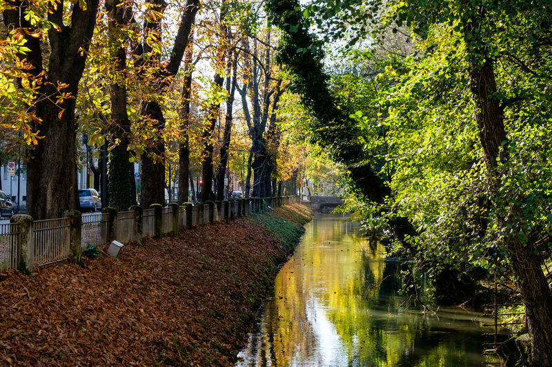 Canal by trees in city