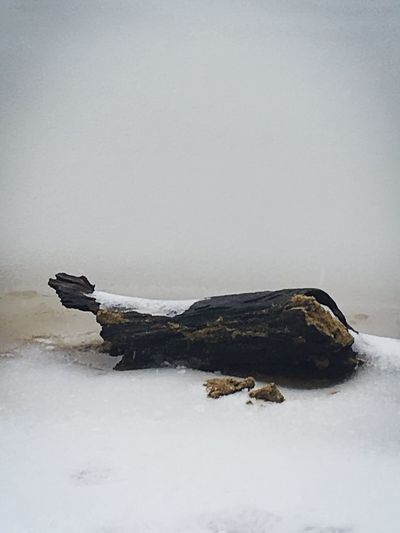 EyeEm Select - Driftwood on the shoreline of Echo Lake Simple Things Are The Best  Grey Spring Storm Snow April Things I See Shadow And Light Dim Light Cold Spring Snow Late Snow Springtime New Hampshire, USA Lake Shoreline Driftwood EyeEm Selects Nature No People Water Day Copy Space Land Non-urban Scene Environment Relaxation