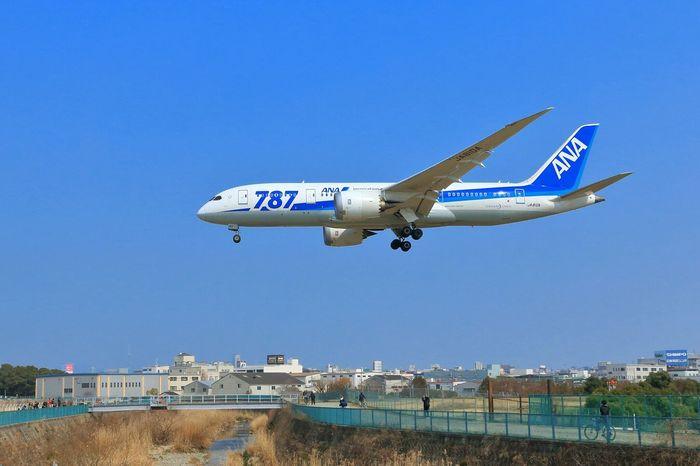 ボーイング787-8 ドリームライナー 大阪国際空港 千里川 Japan Osaka,Japan AirPlane ✈ Airport Boeing787 Airplane Shot Airplane View