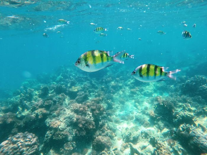View of fish in sea, diving underwater