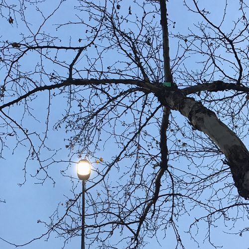 Tree Bare Tree No People Outdoors Sky Lantern Night Waiting EyeEmNewHere