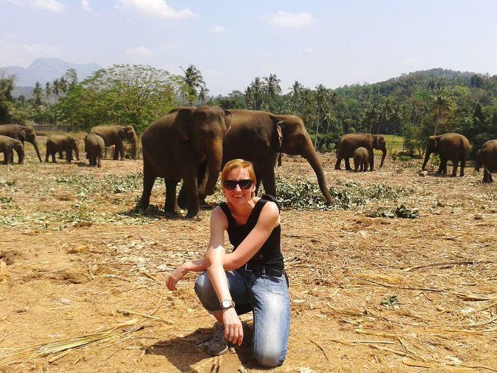 Portrait of woman in sunglasses with elephants kneeling on field
