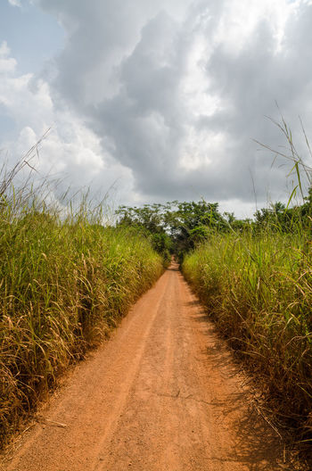 Dirt track leading through high elephant grass with dramatic cloudy sky in rural sierra leone, africa