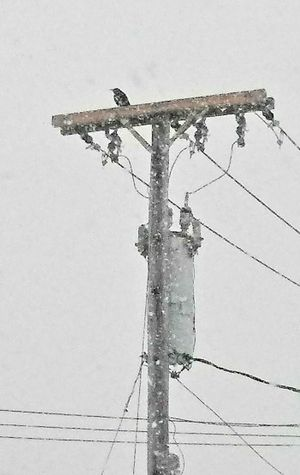 Crow in the snow ~ Outdoors Day No People Telephone Line Sky Bird Of Prey Snowstorm 2018 Beauty In Nature My Point Of View Tranquility Loving The Landscape Winter Cold Temperature My Neighborhood. Colors Of Life Love Power In Nature Vs Fragility My Life In Portland Maine USA