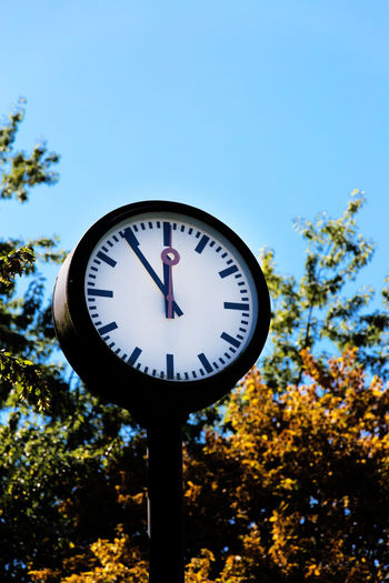 Time Tree Plant Clock Low Angle View No People Blue Sky Nature Shape Day Focus On Foreground Geometric Shape Close-up Outdoors Clear Sky Circle Clock Face Accuracy Minute Hand Hour Hand Second Hand Round 5 To 12 Deadline