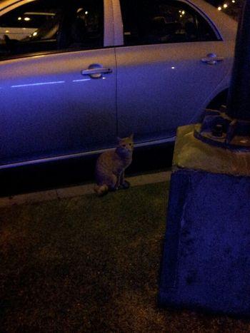 Found A Kitty