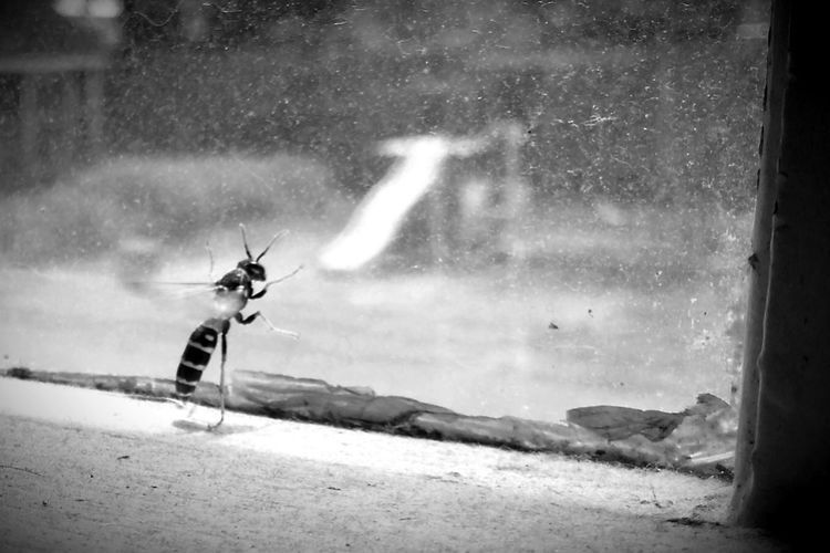 Woof! Shootermag AMPt_community Blackandwhite Insects