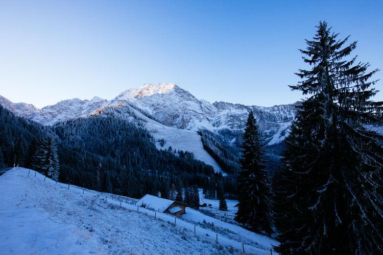 Alps Bavaria Blue Sky Mountain Mountain Range Mountains Rossfeld Snowcapped Mountain Tree Winter