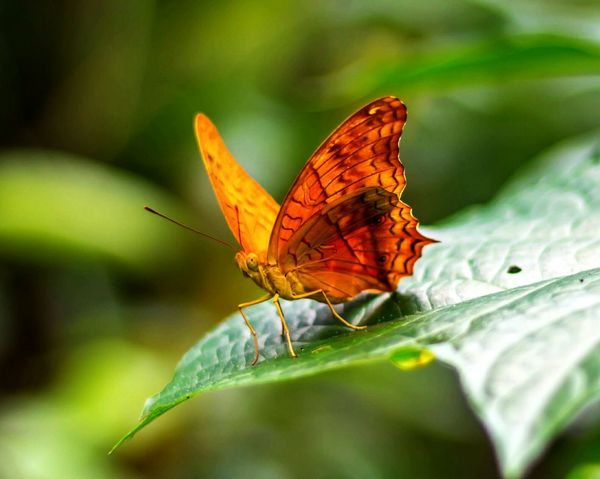 Butterfly - Insect Leaf Close-up Nature EyeEm Best Shots - Nature Beauty In Nature Butterfly Park My Fav♡ Bali, Indonesia The Great Outdoors - 2017 EyeEm Awards