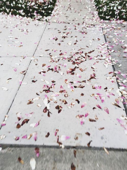 Spring Sprung First Eyeem Photo Millennial Pink