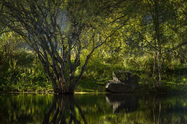 Grass Beauty In Nature Day Foliage Forest Lake Lake View Nature No People Outdoors Plant Reflection Scenics - Nature Shadow Stone Tranquil Scene Tranquility Tree Water EyeEmNewHere A New Beginning 17.62°