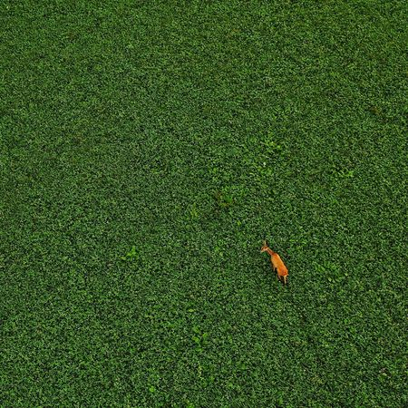 Early meetings Deer Mavic2pro Naturephotography Fromwhereidrone Greenery Wildlife Wild Animals Meadows Deer Eating Earlymorning  WoodLand High Angle View Full Frame Backgrounds Grass Green Color