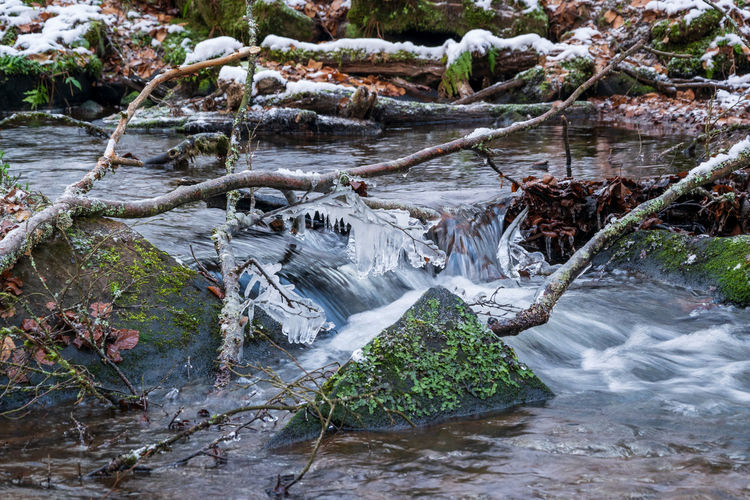 View of frozen river in forest