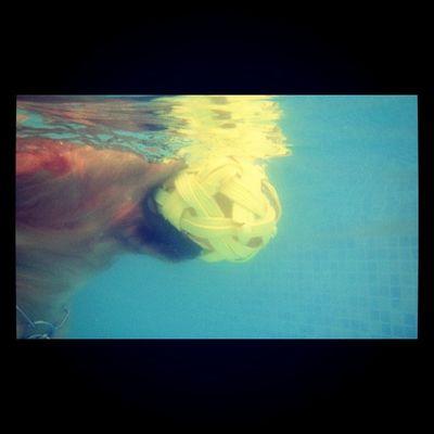 Underwater Hoykong Dogslife Ifuckinglovemydog Instagramgoldens Ilovemydogs Dog Underwater Golden Goldenretriever Petstagram Dogstagram