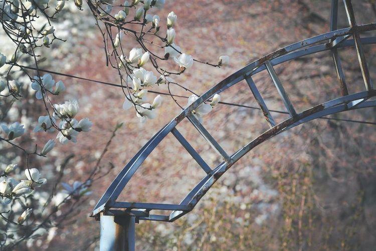중계동 104마을의 봄 Spring Streetphotography