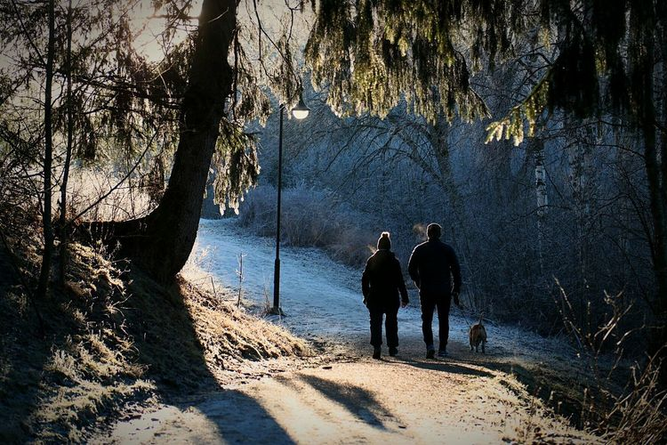 Silhouette Tree Nature Two People Outdoors Winter Pets Beauty In Nature People Enjoying The Sun EyeEmNewHere Pretty Frozen Norway🇳🇴 Norge🇳🇴 Årnes Clear Sky Cold Temperature Dogwalk Enjoying Life Real People Rear View Day Track Woodlands Lost In The Landscape