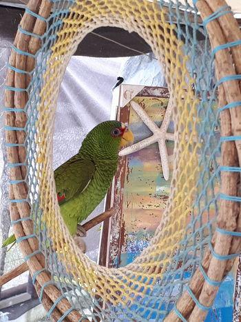 Perico Fishing Net Indoors  Animal Themes One Animal Animal Wildlife No People Bird Nature Close-up