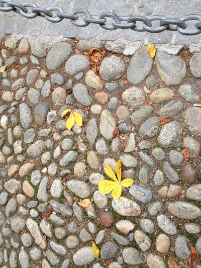 Old Way Photography December 2016 Brig Switzerland Beauty In Nature Close-up Cobblestone Day Flower Fragility Full Frame High Angle View Nature No People Outdoors Pebble Petal Stone Tile Textured  Yellow Paint The Town Yellow