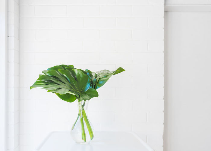 Monstera plant leaves in glass vase on white table against painted brick wall Background Botany Brick Copy Space Decor Decoration Fresh Glass Green Growth Home Indoors  Interiors Leaves Minimal Monstera Natural Nature Painted Plant Simplicity Stems Style Swiss Cheese Table Vase Wall White Green Color Wall - Building Feature White Color No People Freshness Plant Part Beauty In Nature Fragility Close-up