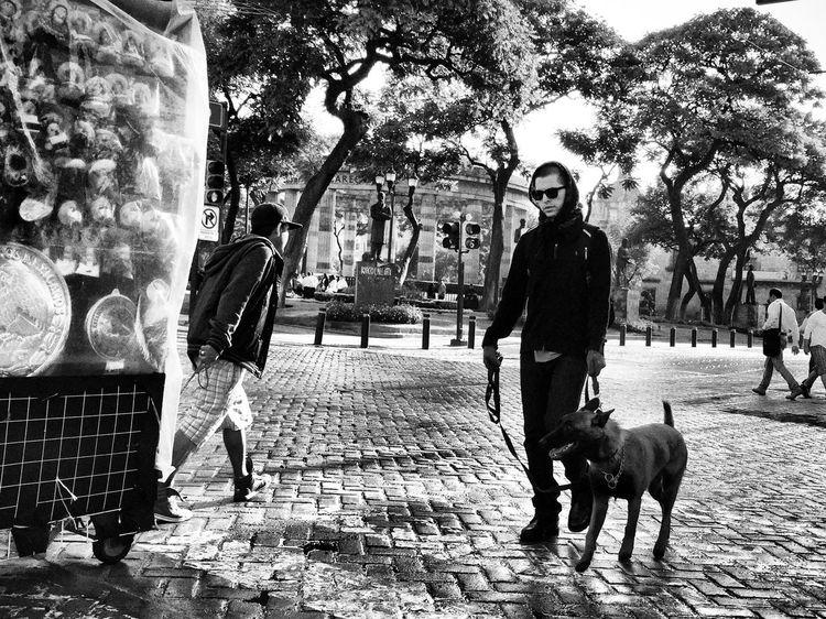Morning walk NEM Black&white Streetphoto_bw Blackandwhite Streetphotography Street Photography Monochrome Streetphotography_bw Black & White Streetphoto Street Life