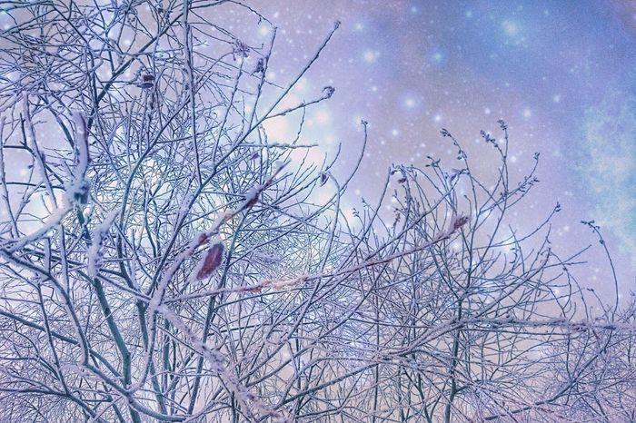 precious・morning❄Nature Tree No People Beauty In Nature Outdoors Snowlandscape Sky Winterlandscape Snow Winter Japan Hokkaido 北海道 Naturelandscapes 木 樹 自然 Dreamy Fantasy