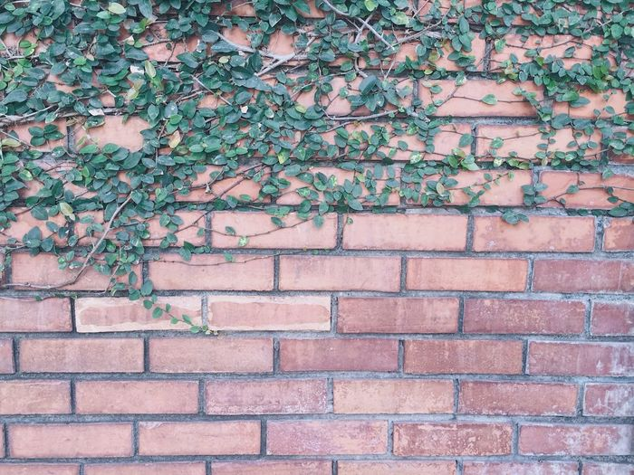 Creeper Ivy Architecture Built Structure Brick Wall Growth Outdoors Plant Creeper Plant Backgrounds Nature Day Neighborhood