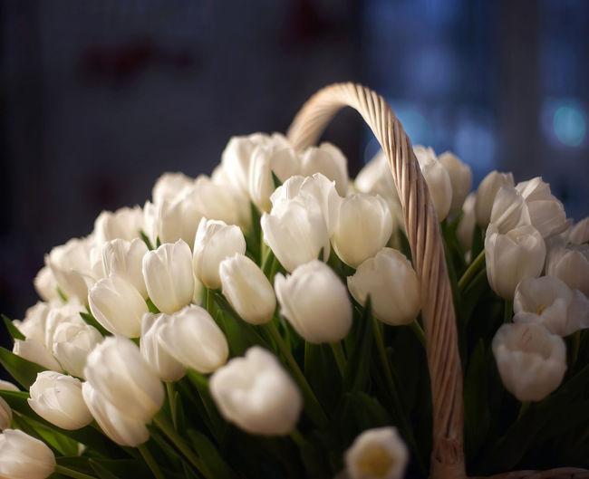 White tulips,