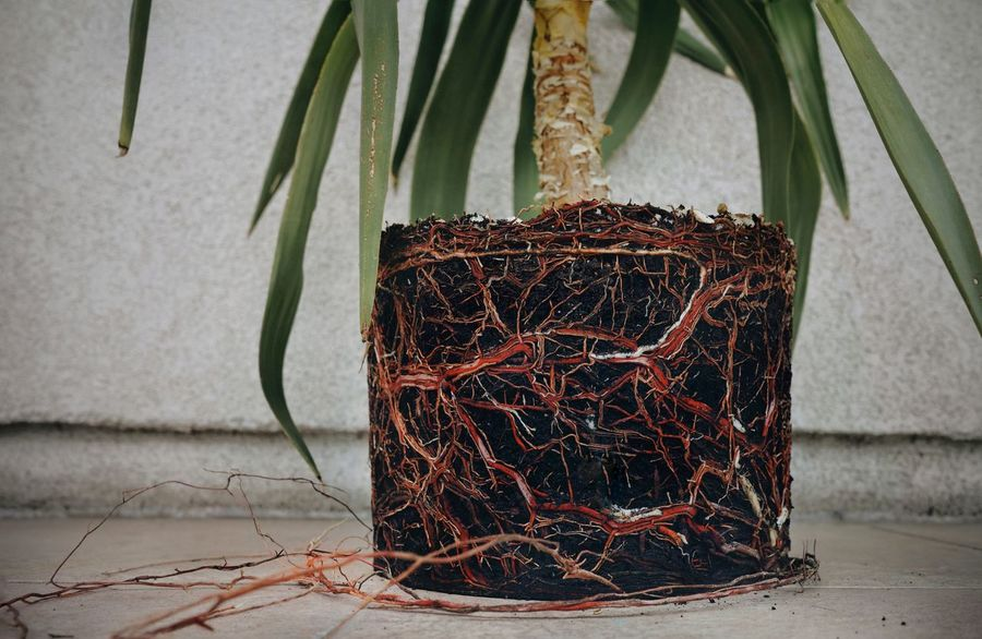 Nature Plant Root Roots Plant Root No People Close-up Wilted Plant Growing Plant Life Leaves